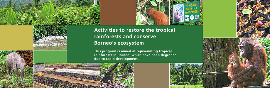 This program is aimed at rejuvenating tropical rainforests in Borneo, which have been degraded due to rapid development.